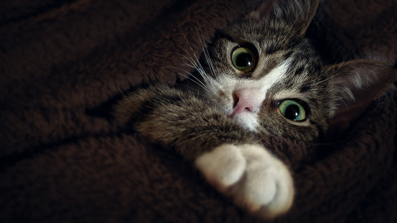A cute kitty looking at you with its greenish eyes.